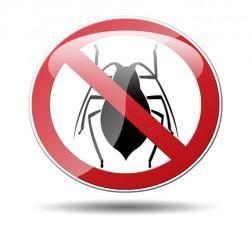 Cucarachas en casa: control de plagas